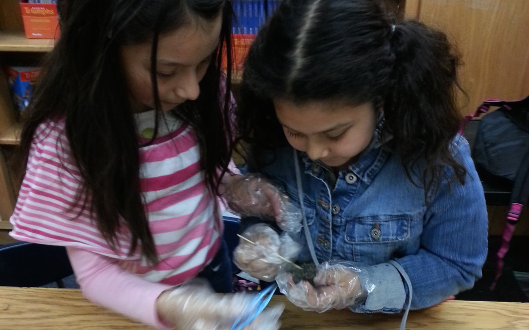 Owl Pellet Dissection Activity is a hit